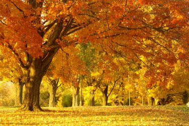 5 top tips to get your skin autumn ready